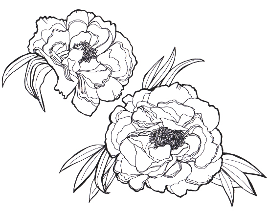 Peony Flower Line Drawing : Peonies eat sleep sketch